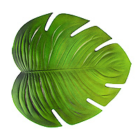 Grande Feuille Verte Tropicale Monstera 47 x 42 cm